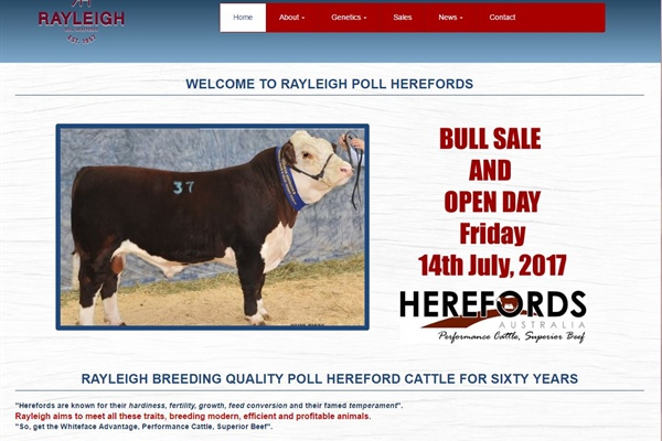 Rayleigh Poll Hereford Stud